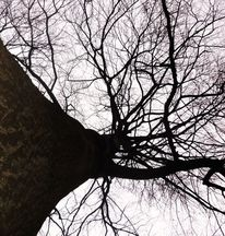 Baum, Raum, Himmel, Fotografie