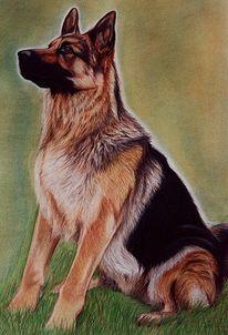 Malen, Zeichnung, Hundeportrait, Schäferhund