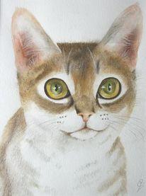 Aquarellmalerei, Pastellmalerei, Katze, Tierportrait