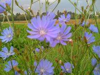 Blumen, Fotografie, Pflanzen