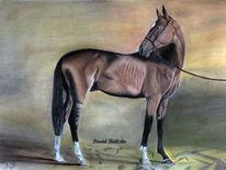 Pferde, Pastellmalerei, Zeichnung, Malerei