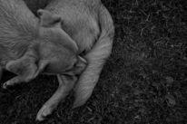 Ausdruck, Fotografie, Tiere, Ruhen