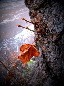 Blätter, Durchbrechen, Orange, Winter