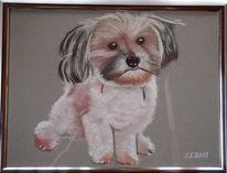 Hundchen, Kleiner hund, Malerei,