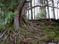 Wurzelwerk, Wurzel, Nikko, Baum