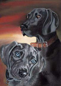 Pastellmalerei, Weimaraner, Hundeportrait, Tiere