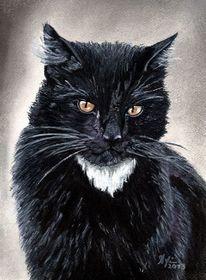 Kater, Katze, Augen, Malerei