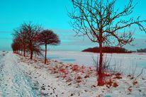 Baum, Schnee, Winter, Fotografie
