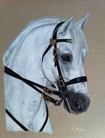 Pfred, Weisses pferd, Zeichnungen