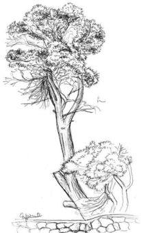 Baum, Pinie, Natur, Malerei