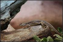 Reptilium, Exen, Fotografie, Tiere