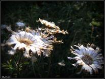 Pflanzen, Herbst, Samen, Wegesrand