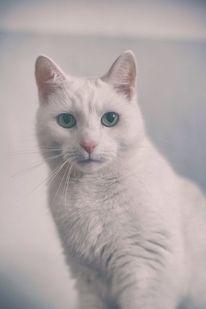 Charlottchen, Tageslicht, Katze, Portrait