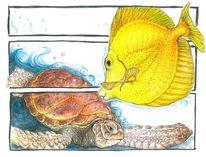 Schildkröte, Fsich, Meerestiere, Doktor fisch