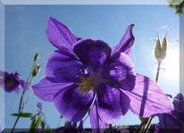 Lichtspiel, Lila, Pflanzen, Sommer