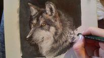Wolf, Zeichnung, Portrait, Natur