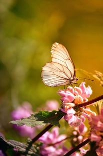 Blumen, Schmetterling, Natur, Fotografie