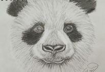Panda, Bleistiftzeichnung, Zeichnungen