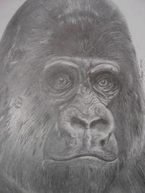 Grafik, Bleistiftzeichnung, Gorilla, Grau