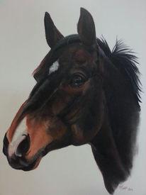 Tiere, Pastellmalerei, Malerei, Pferde