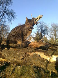 Natur, Katze, Frühling, Fotografie