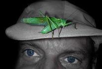 Tiere, Insekten, Natur, Heuschrecke