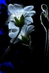 Blumen, Natur, Lichtspiel, Pflanzen