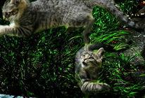 Natur, Haustier, Katze, Szene