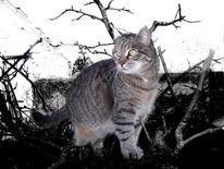Tiere, Natur, Raubtier, Katze
