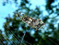 Makroaufnahme, Natur, Spinne, Mystik