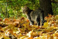 Katze, Tiere, Stimmung, Herbst