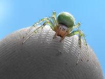 Insekten, Makro, Natur, Spinne