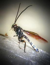 Insekten, Makro, Fliege, Fotografie