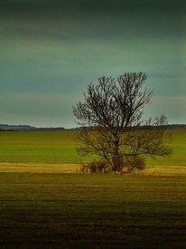 Allein, Wiese, Baum, Ruhe