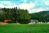Grün, Baum, Ufer, Wasser