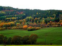 Herbst, Bunt, Farben, Pflanzen