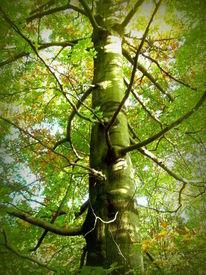 Ruhe, Blätter, Schatten, Grün