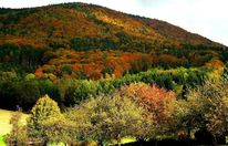 Pflanzen, Wald, Herbst, Natur