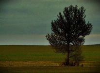 Ruhe, Wiese, Allein, Baum