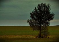 Braun, Ruhe, Wiese, Baum