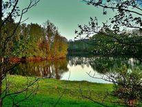 Baum, Grün, Wasser, Ufer