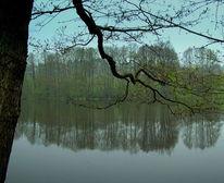 Regen, See, Ruhe, Baum