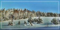 Weiß, Wald, Rauhreif, Schnee