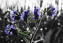 Gegenlicht, Blumen, Fotografie