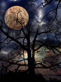 Nacht, Baum, Mond, Fotografie