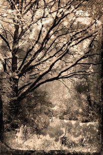 Baum, Winterlandschaft, Fotografie