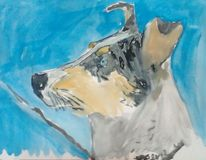 Kurzhaar collie, Blue merle, Smooth collie, Aquarell
