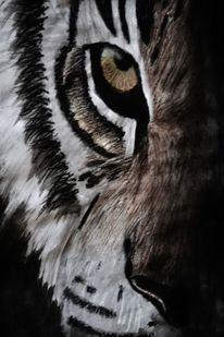 Augen, Großkatze, Fell, Katze