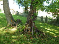 Baum, Holz, Äste, Fotografie