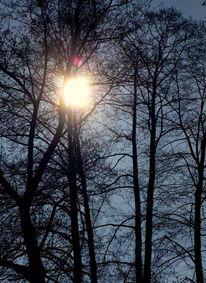 Himmel, Zauber, Baum, Licht